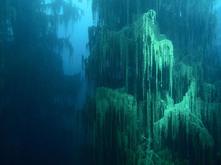 Sunken Forests Lake Kaindy