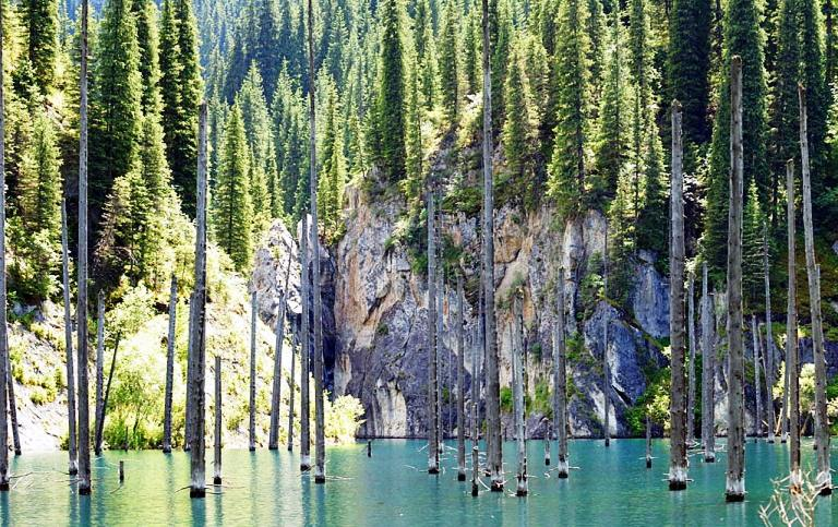 Sunken Forest In Lake Kaindy