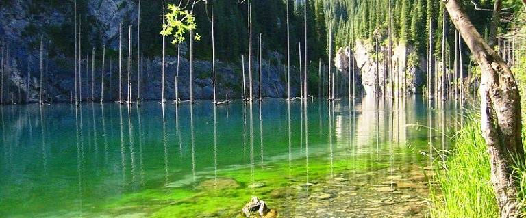 Sunken Forests