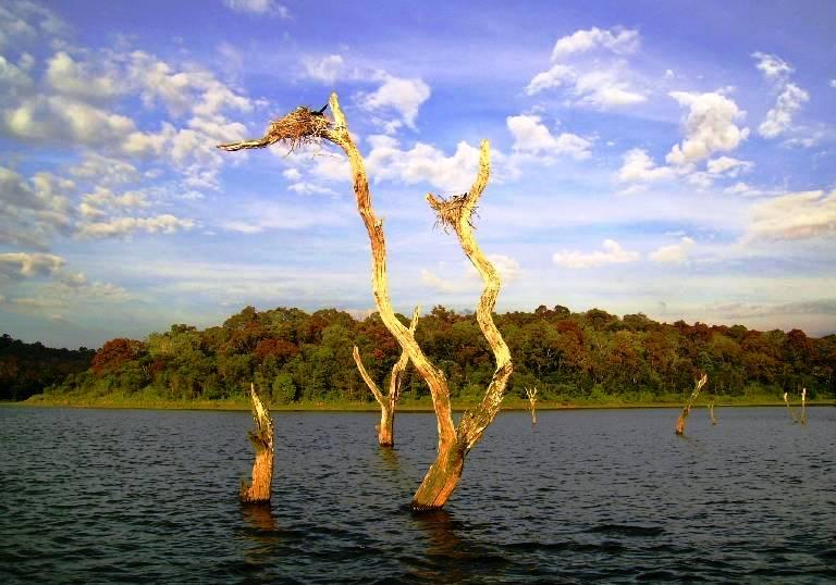Sunken Forests In Periyar Lake