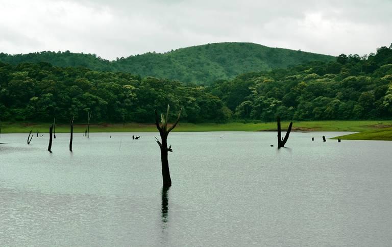 Periyar Lake Sunken Forests