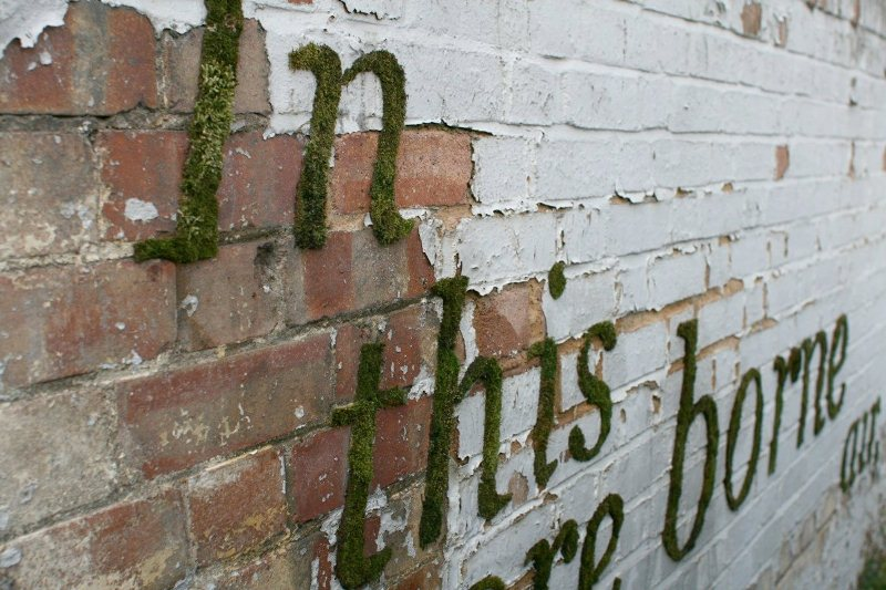 Moss Graffiti Writing On Wall