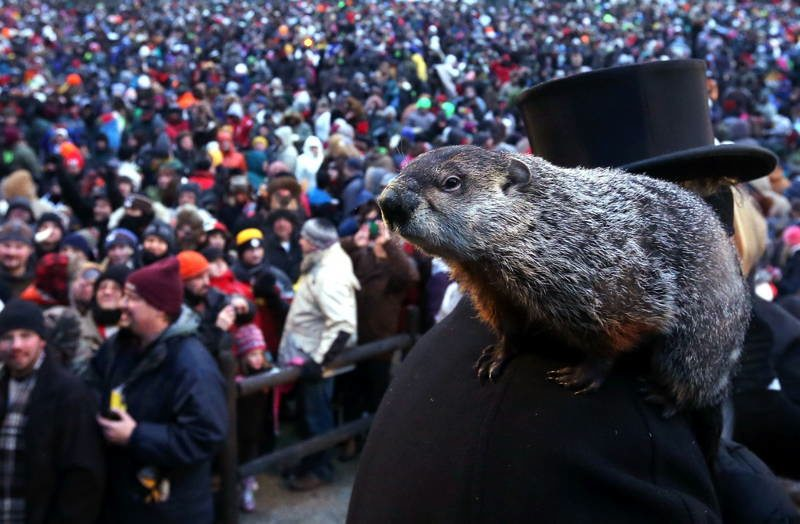Animals With Sixth Sense Groundhog