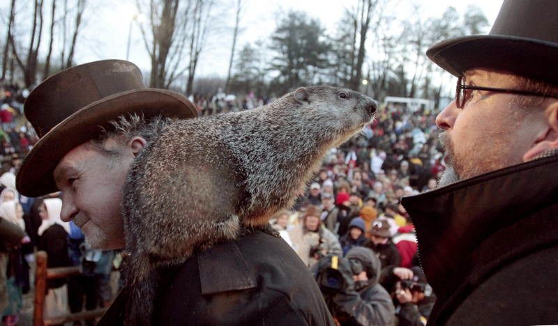 Animals With Sixth Sense Punxsutawney Phil