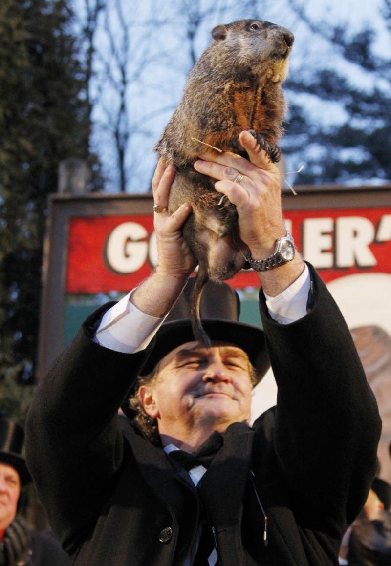 Sixth Sense Animals Groundhog 3