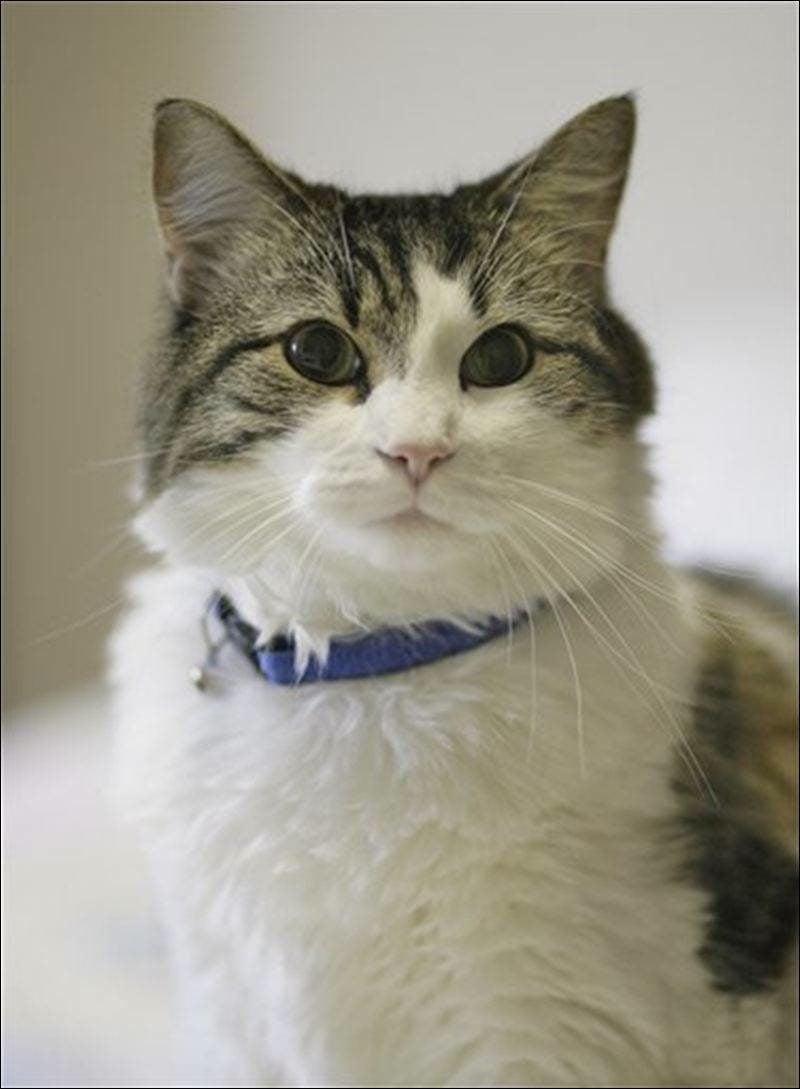 Sixth Sense Animals Oscar The Cat