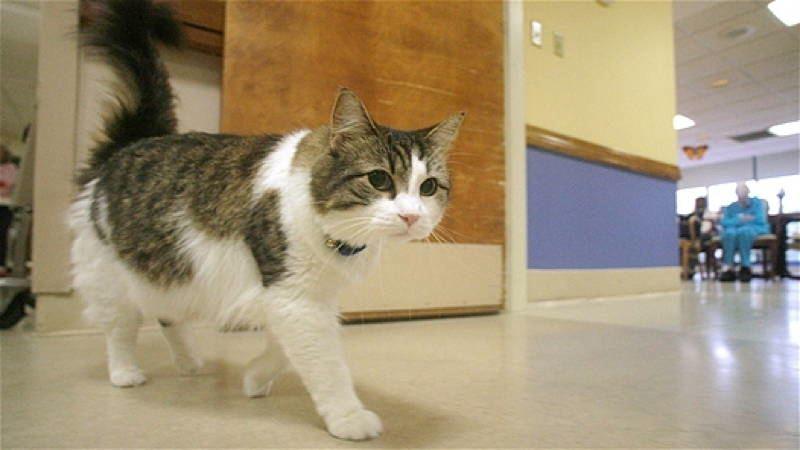 Oscar The Cat Sixth Sense
