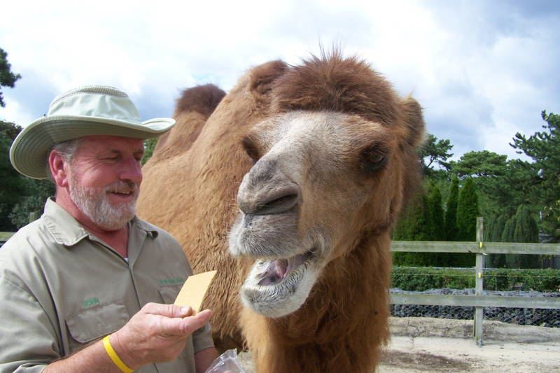 Sixth Sense Animals Camel