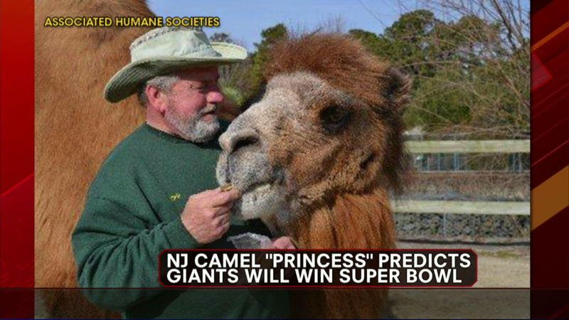 Animals With Sixth Sense Camel the Princess