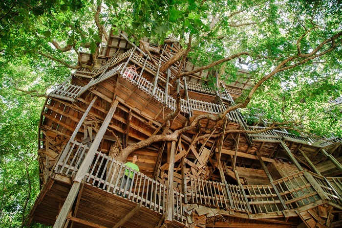 Green Design Treehouse View