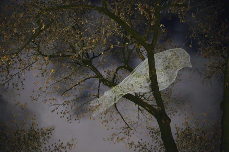 Ethereal Birds 2