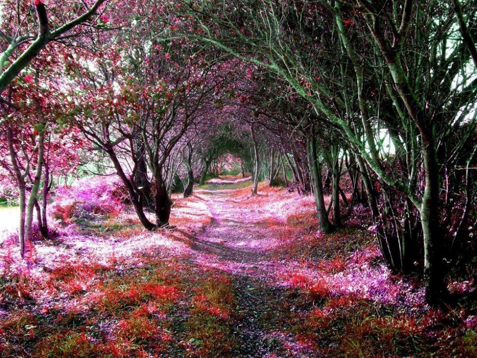 Tree Tunnel Sena De Luna