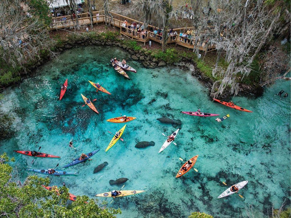 Kayaks Manatees Three Sisters Springs Florida