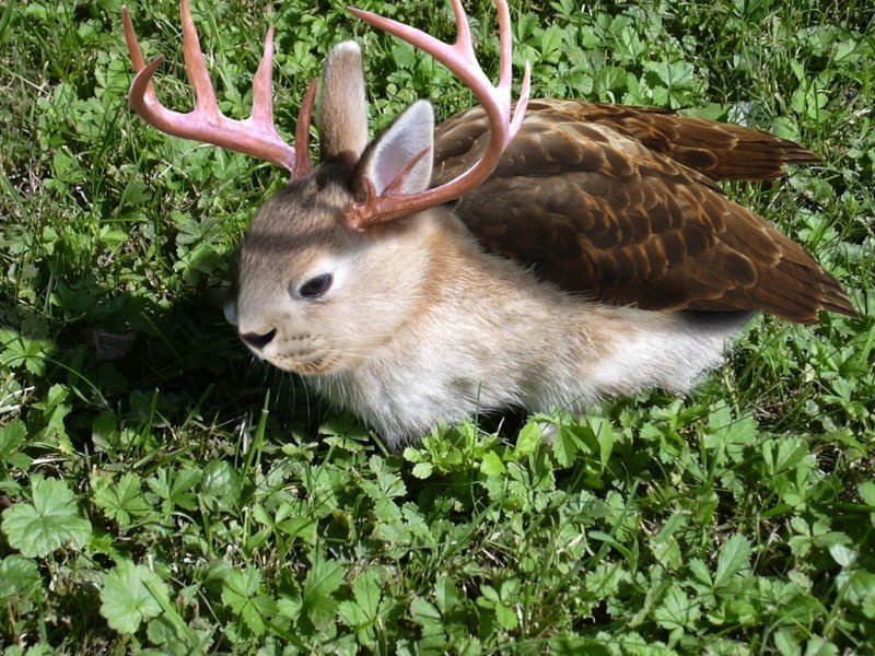 Cooler Cryptids Wolpertinger
