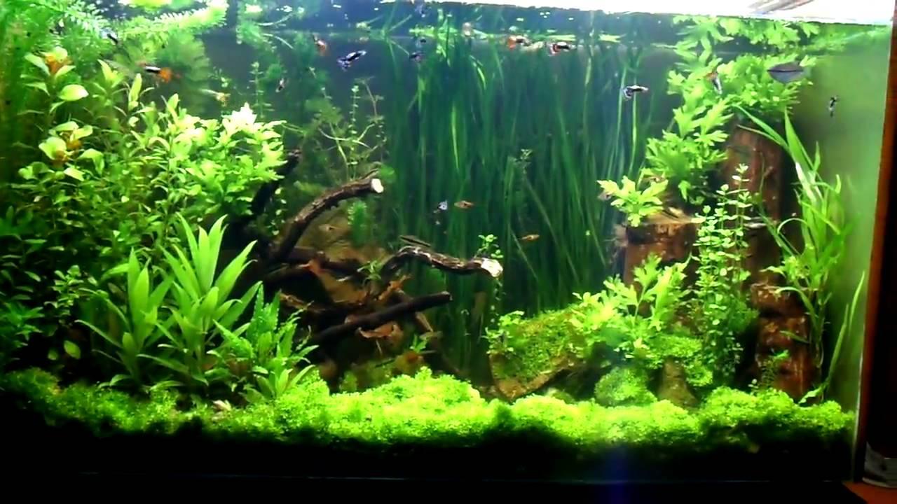 The world 39 s five best aquariums for Spacearium aquariums