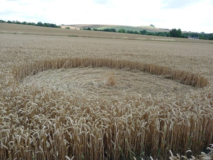 Close Up Picture Of Crop Circles