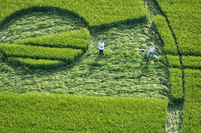 People Making Crop Circles