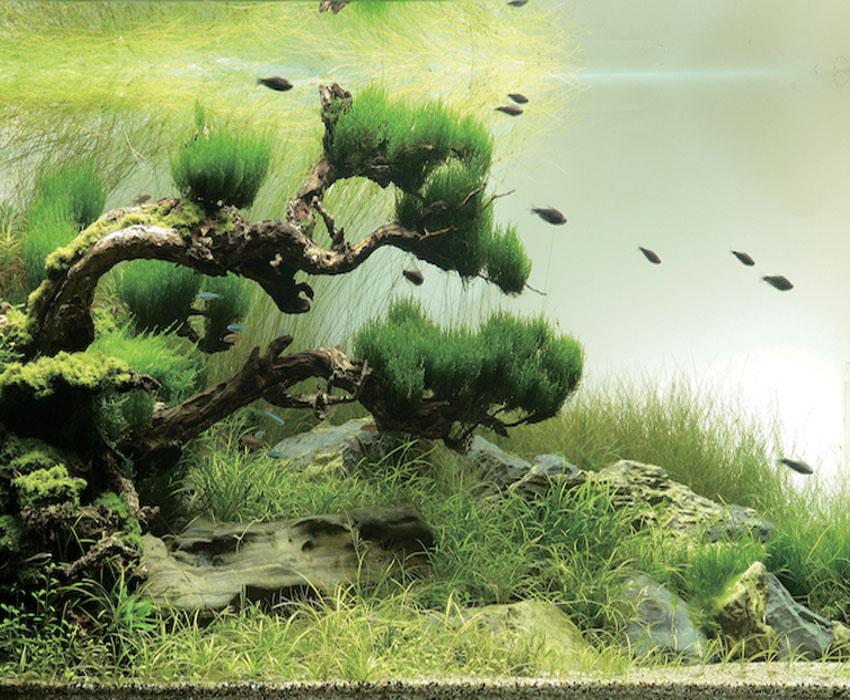 Aquarium Art Takashi Amano