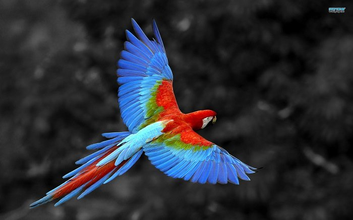 Incredibly Colorful Animals Scarlet Macaw