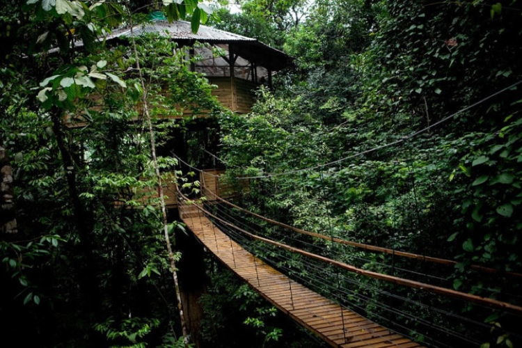 Sustainable Treehouse 1