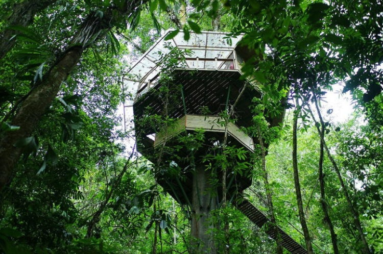 Sustainable Treehouse 2