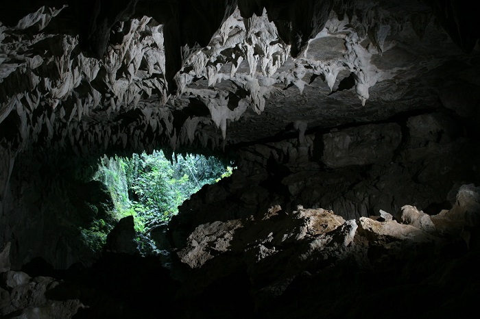 Waitomo Caves From Inside