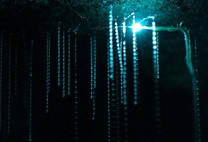 Waitomo Caves Hanging Threads Lit Up