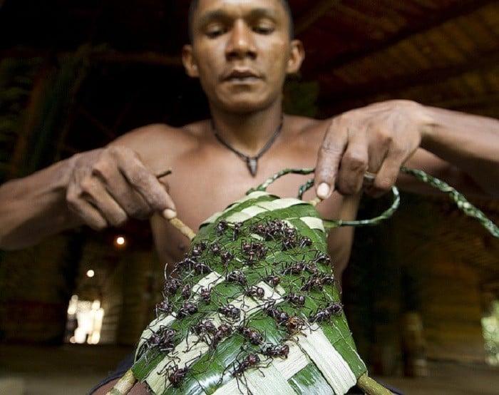 آداب و رسوم عجیب دنیا ، دستکش مورچه گلوله در قبایل آمازون