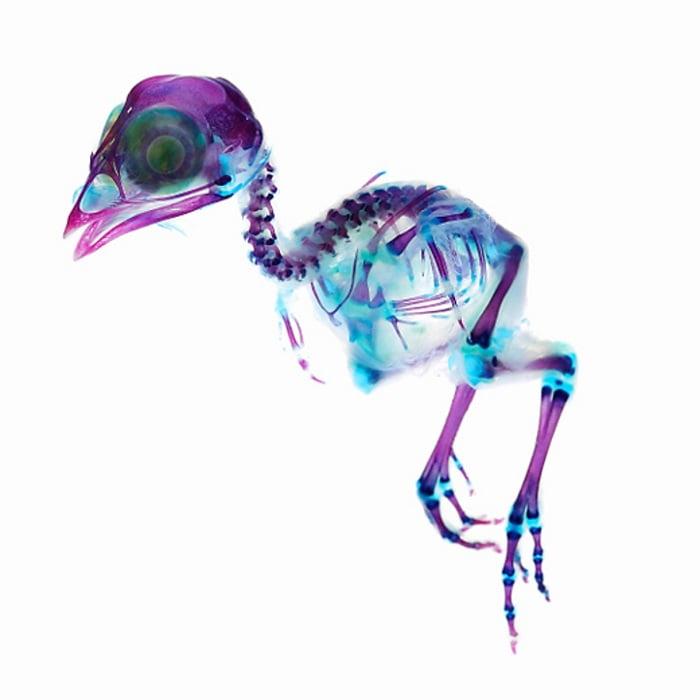 Iori Tomita Bird