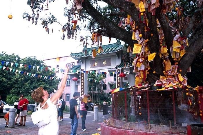 Wishing Trees Tai Po