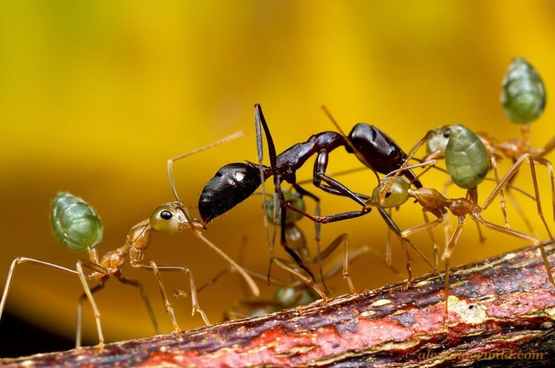Ant Wars Multiple
