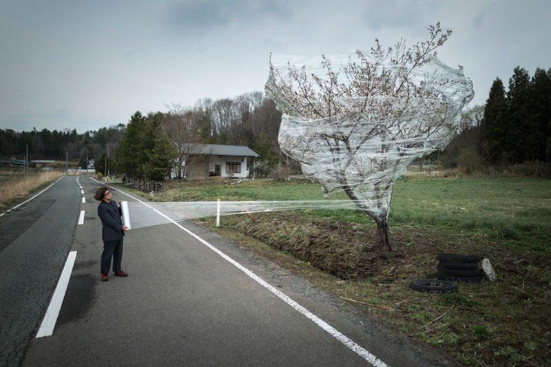 Fukushima Devastation Tree