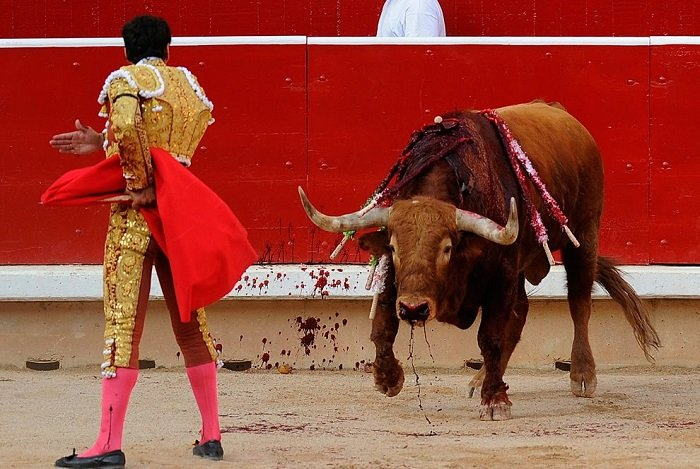 Cruelty Of Spanish Bull Fighting