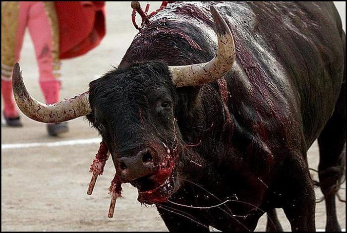 Killing Of Bull