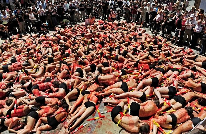 Legacy Of Bullfighting Protests