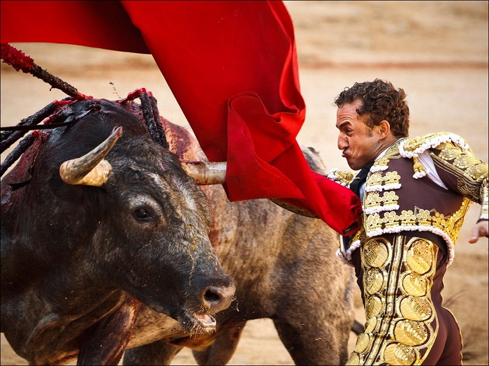 Legacy Of Bullfighting