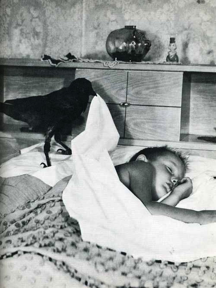Odd Photos Crow Boy