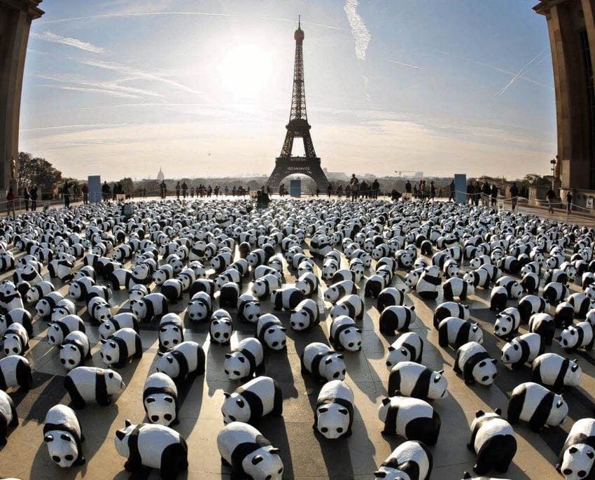 Bizarre PR Paris Pandas