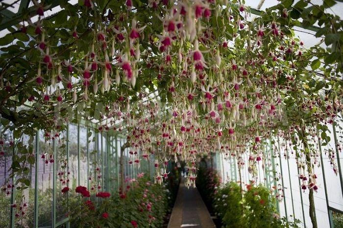 Greenhouse In Belgium