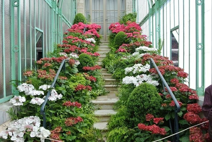 Staircase In The Royal Greenhouses of Laeken
