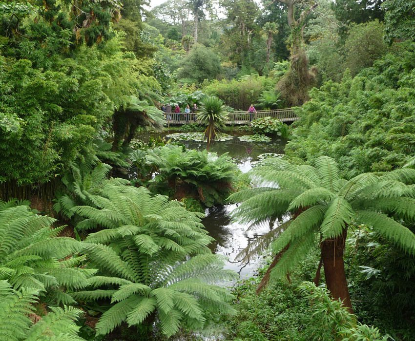 Heligan Jungle