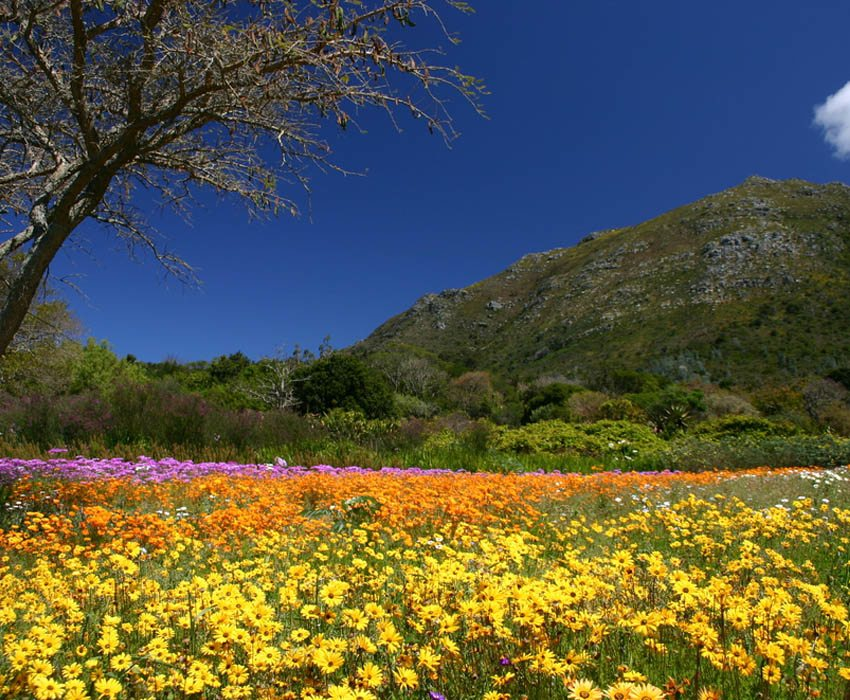 Secret Gardens In Kirstenbosch