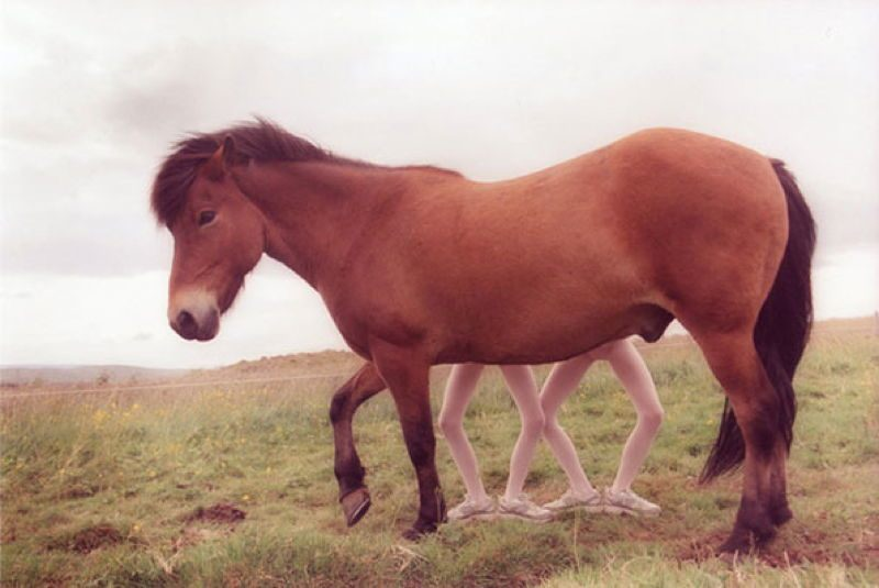Twins Horse