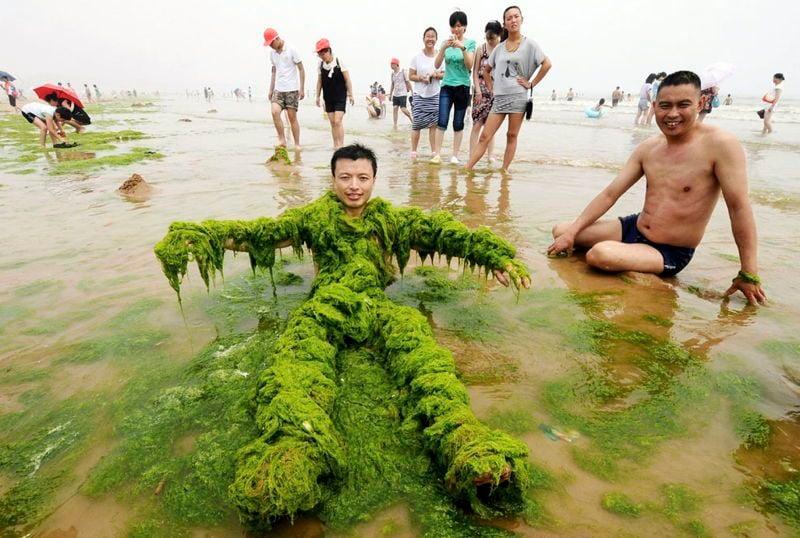 21st Century China Algae