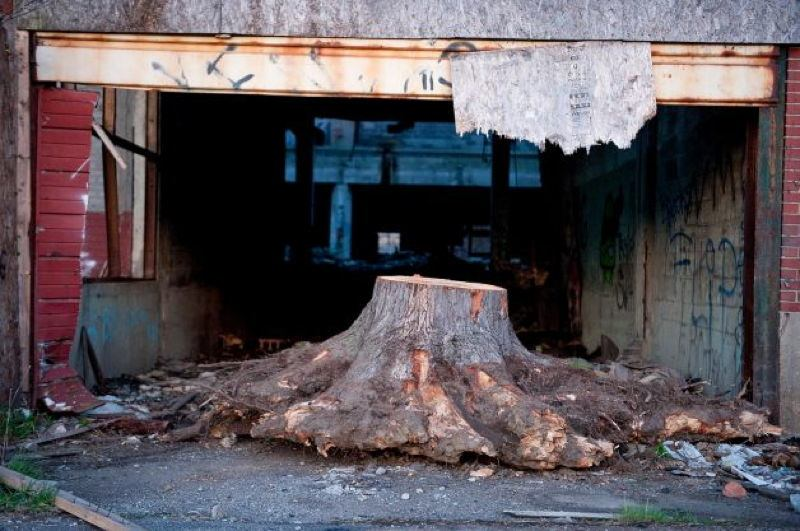 Detroit Tree