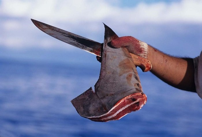 Bizarre Protests Shark Fin