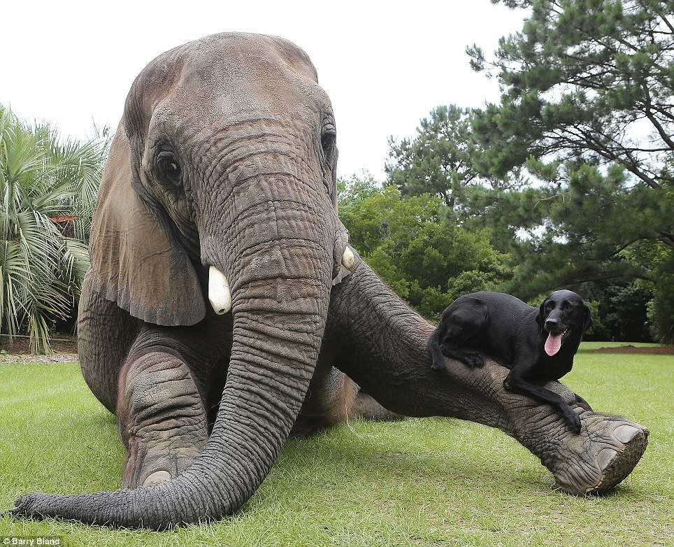 Dog Elephant Pals
