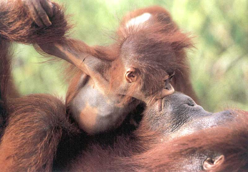 Kissing Primates