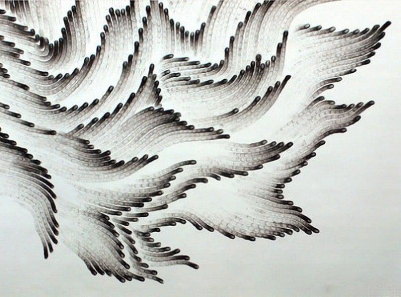 Up Close Fingerprint