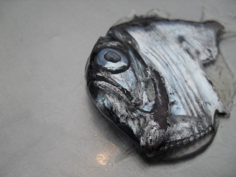 Hatchet Fish Photograph